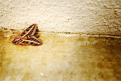 Moth1_1