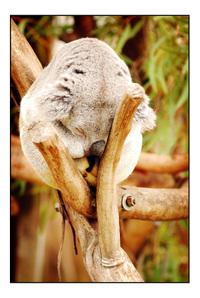Zoo_006_copy_3